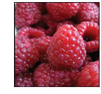 Frequently Asked Questions. Raspberries